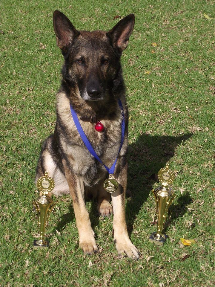 Quando - KUSA National Tracker Dog Champion 2014