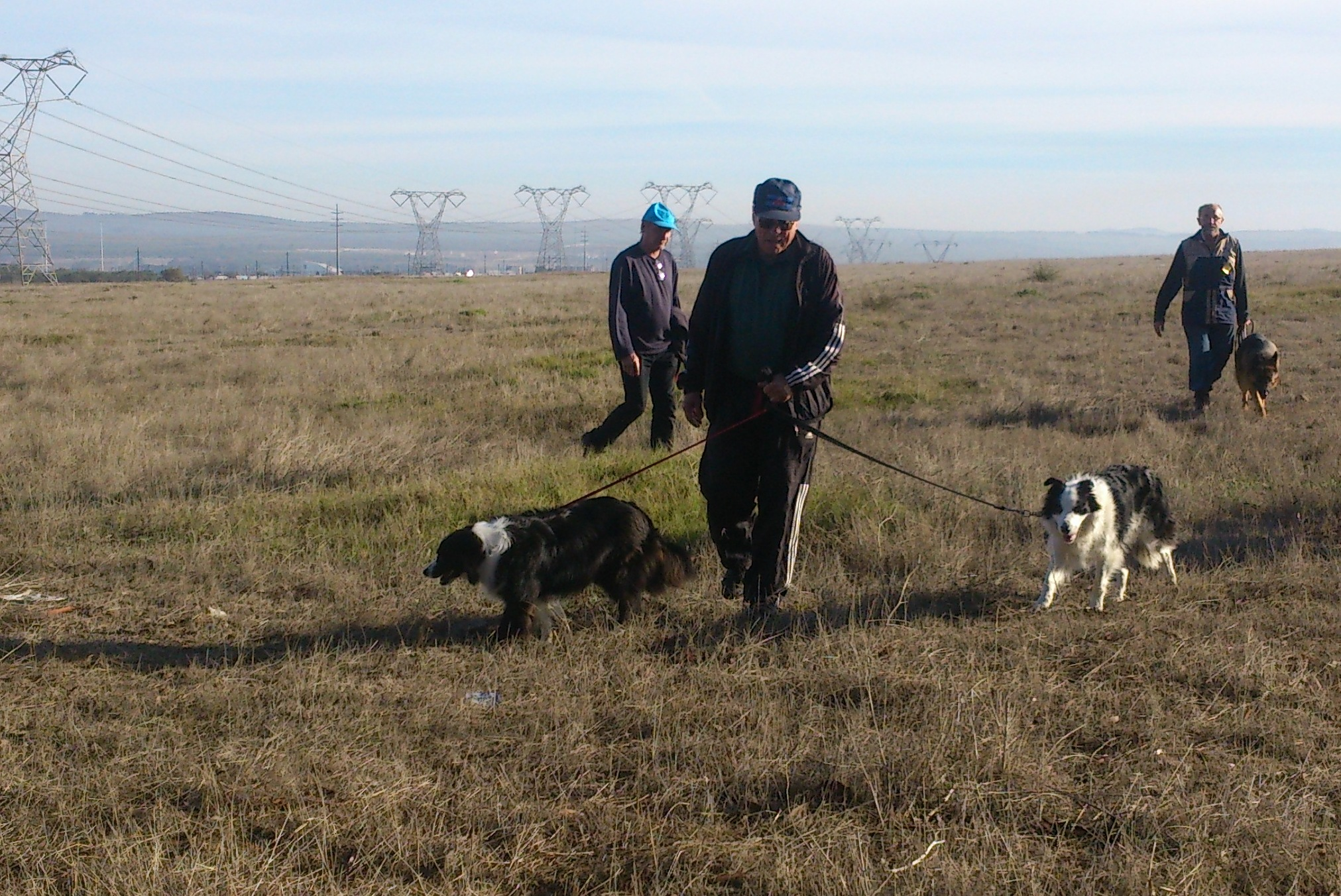 Peggy-Sue, Louis and Siobhan - Peggy SUe Qualified in Companion Dog
